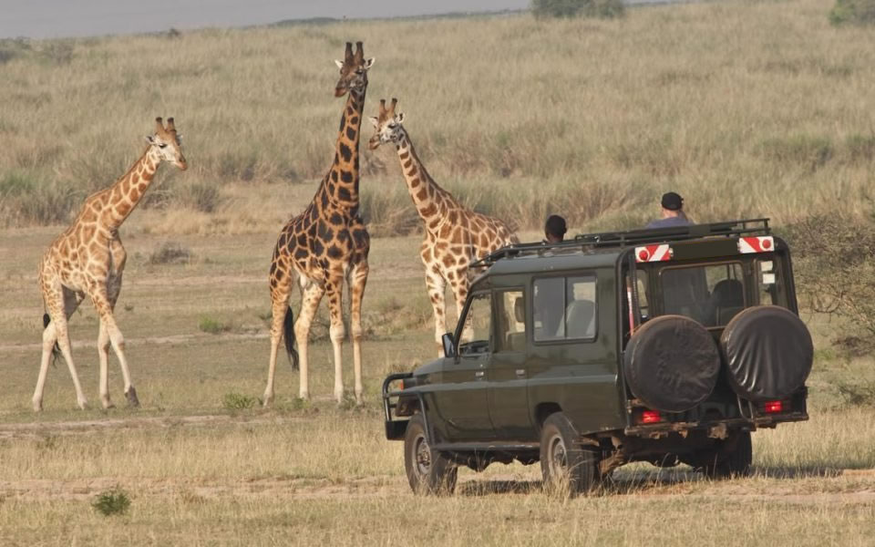 Akagera National park, Tour Rwanda, visit Rwanda, Rwanda tour, Rwanda gorilla tours, Rwanda gorilla safaris, Gorilla trekking trips in Rwanda, Rwanda safaris