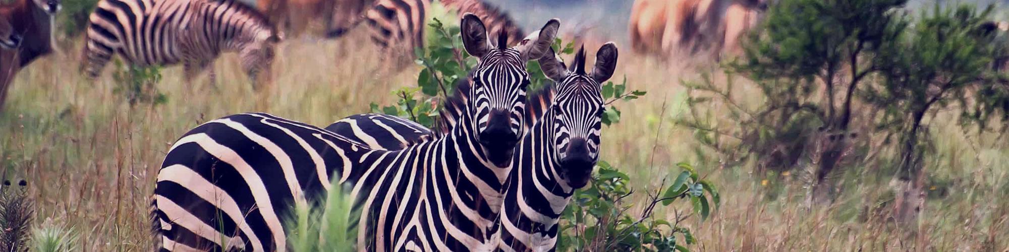 Rwanda National Parks