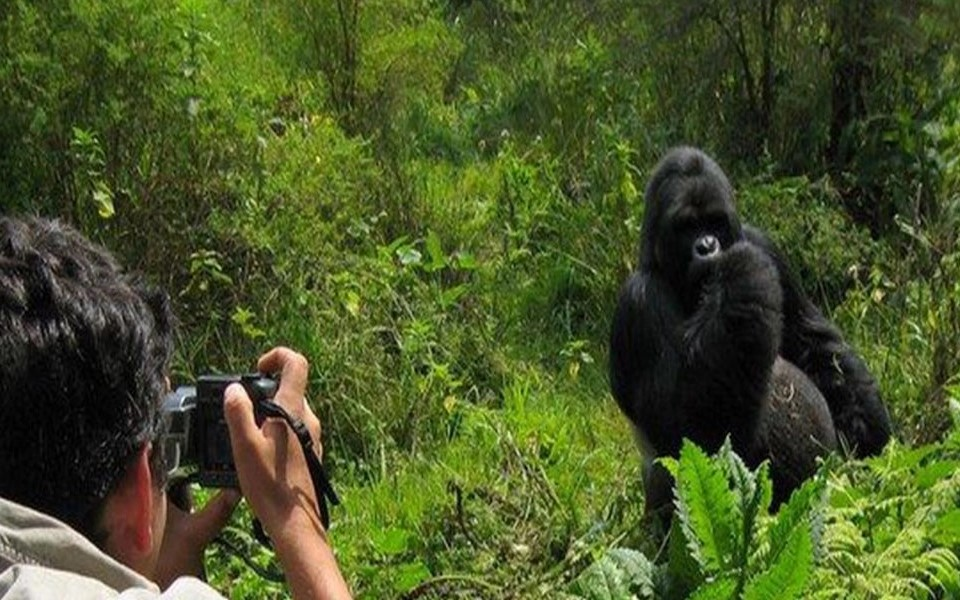 safety and security of any person are paramount especially when it comes to the destination where he or she intends to travel. It is also important for any travelers to ask whether he or she will be safe especially when traveling to Rwanda for gorilla trekking
