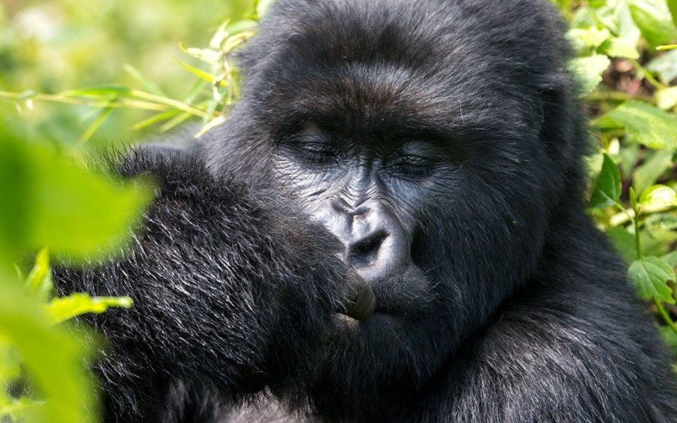 What do I need to know before going to Rwanda?