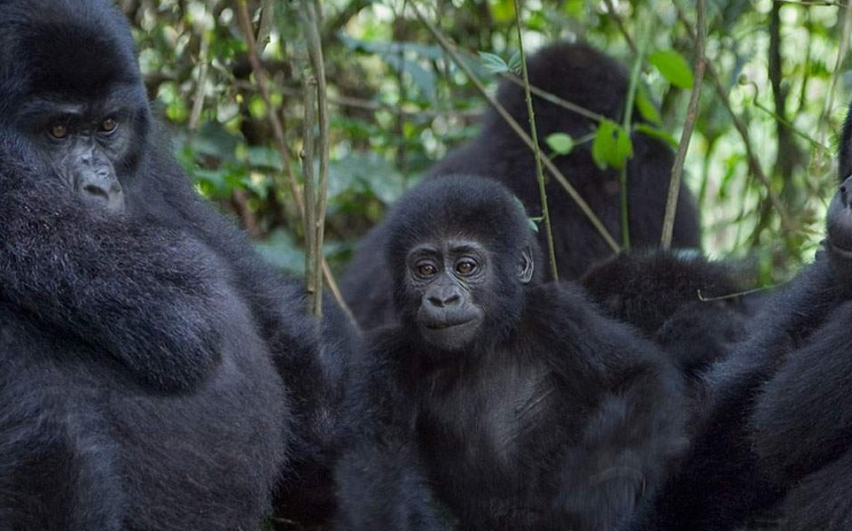 What is the best time to visit Rwanda? Rwanda is among the country that makes the East African region and it borders countries of Uganda, the democratic republic of Congo, Tanzania, and Burundi. Rwanda is well known as a country of a thousand hills.